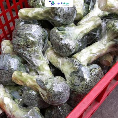 Brokoli Murah